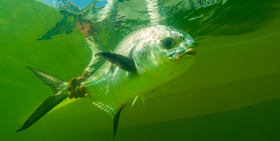 Permit Fly Fishing Lodge Mexico Ascension Bay Bonefish Guide Travel Fly Fish Mexico