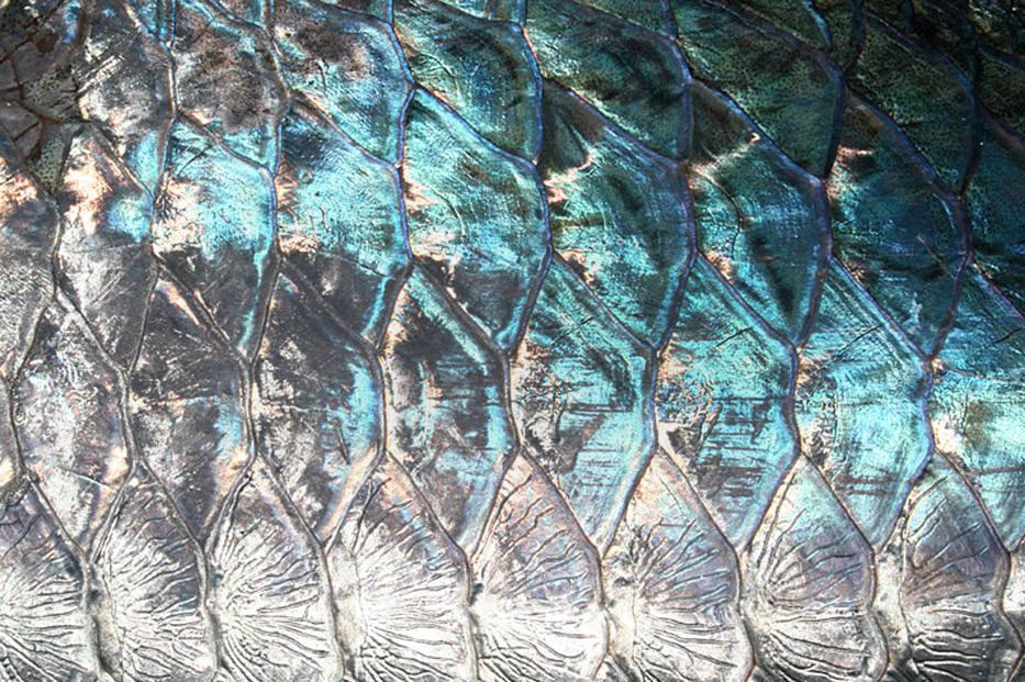 Wading Salt Flats Fishing Guide Fly Fishing Lodge World Mexico Belize Bahamas