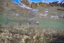 Little Abaco Bonefish Lodge, Bahamas, Abaco Island Bonefishing, Bahamas Bonefishing trip