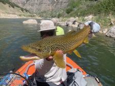 Big fish on big dry flies